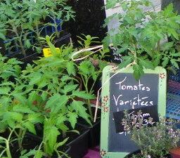 Plants aromatiques et maraîchés